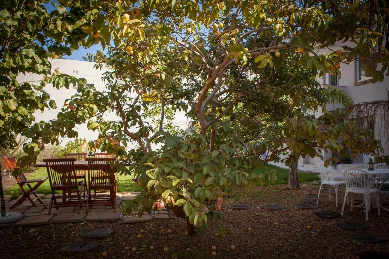 Garden - The Lions - Cape Town - rentals
