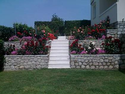 flowers - 5100 A4(3) - Pag - Pag - rentals