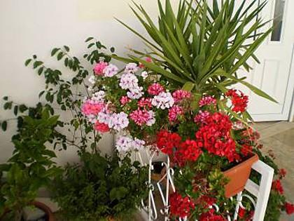 flowers - 01213BVOD  SA2(2) zuti - Baska Voda - Baska Voda - rentals