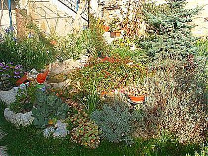 garden (house and surroundings) - 07501SUPE A1(4) - Supetar - Supetar - rentals