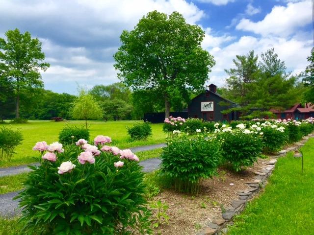 Forty-eight peone bushes mark the drive in, some over 100 years old - Catskill NY/ 2 Bedroom Cottage on Cauterskill  Crk - Catskill - rentals
