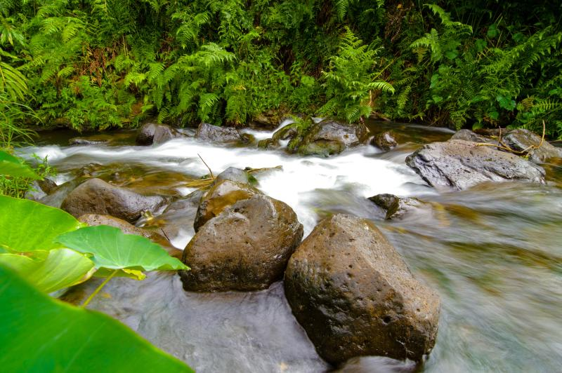 Cool spring-fed stream flows through back of property. - New Ocean View Suite with Stream on Fruit Orchard - Pepeekeo - rentals