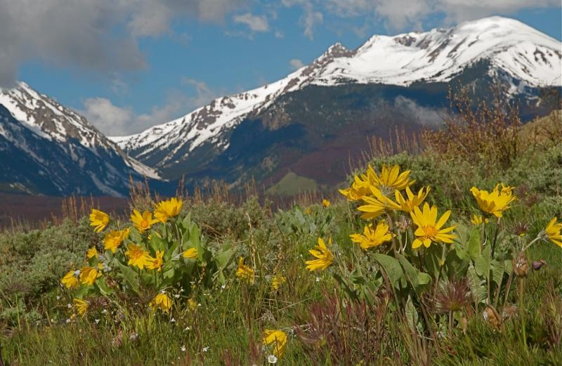 Relaxing Summer Vacation in the Rockies - Image 1 - Silverthorne - rentals