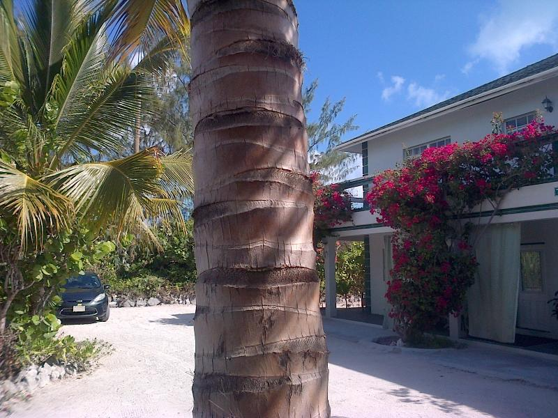 Silver Palm Beach House 1A - Silver Palm Beach House 1A, Turks & Caicos Hotel - Providenciales - rentals