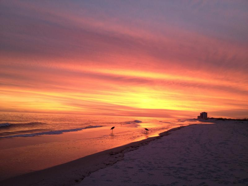 Available ! 3 br-Santa Rosa Towers-Pensacola Beach - Image 1 - Pensacola - rentals
