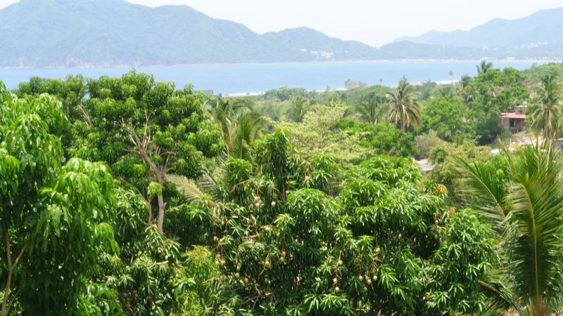 View of beach from terrace of house(Vista a playa de Oro de terrazza en casa) - Sol Del Mar Manzanillo - Manzanillo - rentals