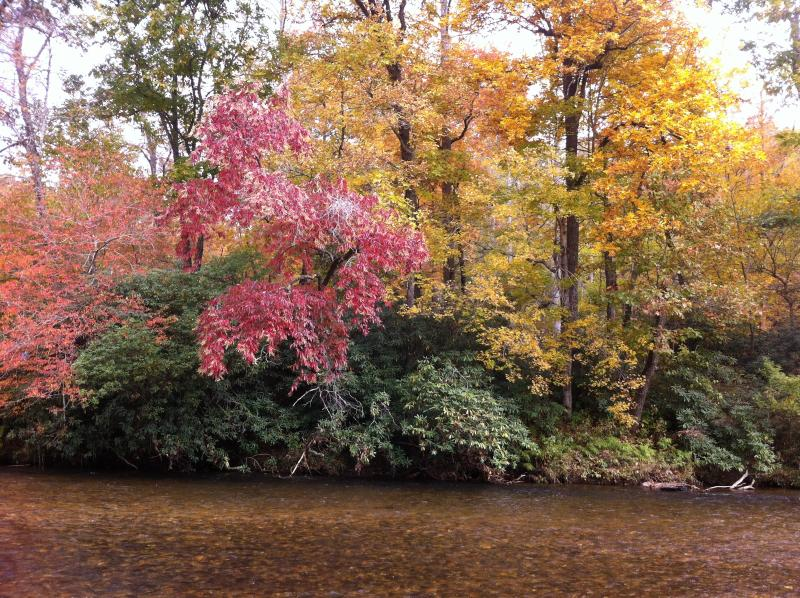 2014 great fall colors from deck - RiverDance Lodge 2 : Riverfront near Waterfalls! - Franklin - rentals