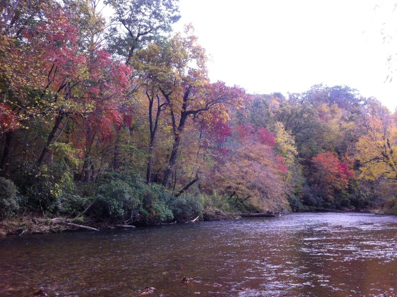 fall colors from our yard - RiverDance Lodge : Riverfront - Near Waterfalls! - Franklin - rentals