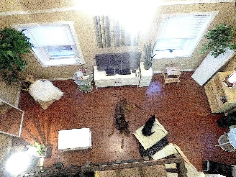 Living room - A+ Trendy Tremont Steps to Professor in Cleveland - Cleveland - rentals