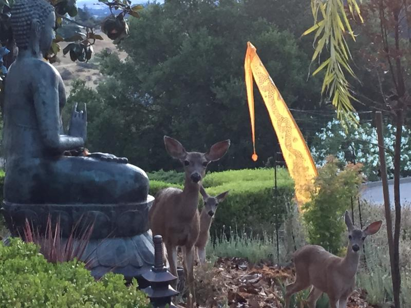 friendly deers everywhere on the property - Amazing Studio Loft on a private Estate - Novato - rentals