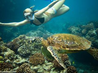 Amazing Oceanfront 3/2 home + 1/1 studio in Kona - Kailua-Kona vacation rentals
