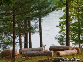 Enjoy the firepit and the wildlife (deer at Breezy fire pit: photo by Gabriel Esler) - BREEZY on Lake of Bays (wheelchair accessible) - Lake of Bays - rentals