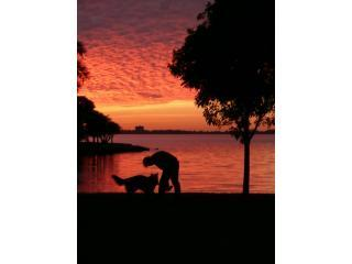 Sunset across the street - Cute Efficiency Apartment - nice neighborhood - Sarasota - rentals