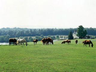 Pasture - Shenandoah Cabin Resort with Horse Farm and Marina - Shenandoah - rentals