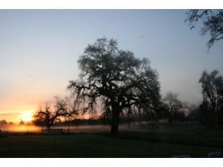 Come enjoy the Oaks of Olivet - Santa Rosa vacation rentals