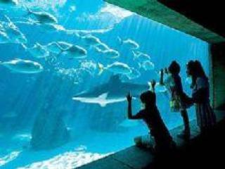 The Dig - Harborside Atlantis August 2- 9 2015 - Paradise Island - rentals