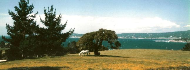 The Acorn Ranch Home - Image 1 - Carmel - rentals