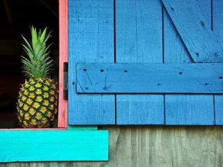 La Finca caribe private rustic retreat for groups - Isla de Vieques vacation rentals
