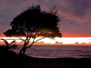 July-August SPECIAL! Ground floor, ocean view - Kapaa vacation rentals