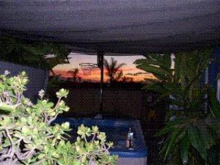 Pet Friendly beach cottage with private yard & spa - Encinitas vacation rentals