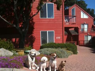 Ocean View and Dog-Friendly Home - Lake Nacimiento vacation rentals