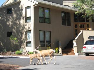 Sunriver Retreat - Sunriver vacation rentals
