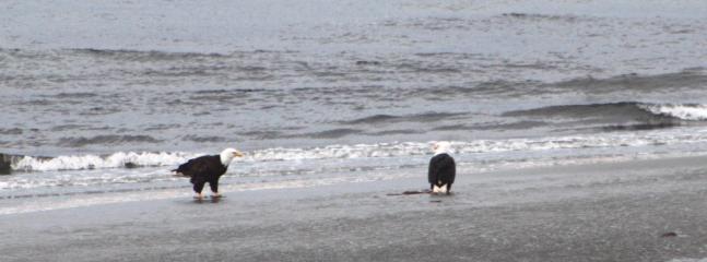 Resident Eagles - EAGLE'S AERIE - Qualicum Beach - rentals
