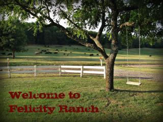 Felicity Ranch - over 180 acres to explore! - Arkansas vacation rentals