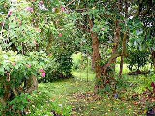 Hana Maui Botanical Garden B&B/Vacatdion Rentals - Hana vacation rentals