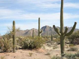 Nature's Vacation Home In The Desert - Tucson vacation rentals
