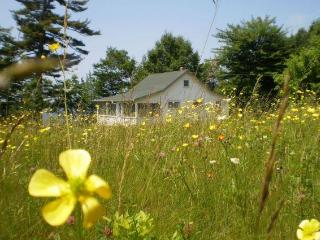 Wildflower Cottage - Eastport vacation rentals