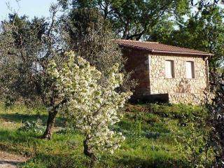 The Almond Tree, farm holidays in Tuscany 4+2 beds - Campiglia Marittima vacation rentals