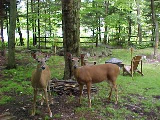 Welcome Friends... - Secluded Lakefront Getaway-SUMMER WEEKS Now $1395 - Mount Pocono - rentals