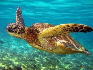 Turtle House - Hawaii vacation rentals
