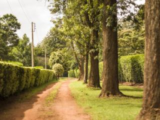Turaco Cottage - Nairobi vacation rentals