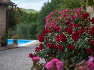 5 Bedroom Villa, Pool, Wifi, AC in Siena Countrysi - Siena vacation rentals