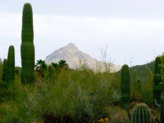 Beautiful 4BR/2BA Home - Tucson Catalina Foothills - Tucson vacation rentals