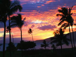 Beautiful Ocean Front 1 Br Condo in Kihei - Kihei vacation rentals