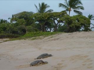 Kona Makai Luxury Condo - Kailua-Kona vacation rentals