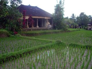 Quiet and peaceful 1 bedroom House in Ubud. - Ubud vacation rentals