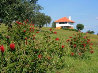 Casa a Oliveira - Alentejo vacation rentals