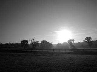 Apartment Close to Horses - Dunnellon vacation rentals
