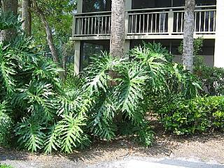 Wild Pines - Bonita Bay D-101 - Bonita Springs vacation rentals