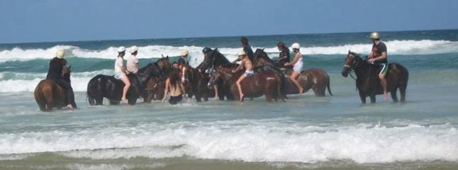 Horse surfing at Lennox head beach at Pegasus park equestrian centre (website: hidden) 66871446 - 1 bedroom self contained cabin at Pegasus Park - Byron Bay - rentals
