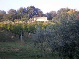 oasi tra mare e monti - Massignano vacation rentals