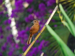 Rainforest Room - Buccoo vacation rentals