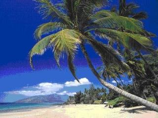 Maui Kamaole Spectacular Oceanfront View remodeled - Kihei vacation rentals