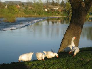 TOURISTIC ECO FARM FORTUNOVI - KOLPA RIVER - Lower Carniola Region vacation rentals