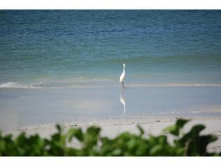 Overlooking Beach on Siesta Key - Image 1 - Siesta Key - rentals