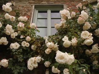 Villa Il Bracconiere - San Polo in Chianti vacation rentals